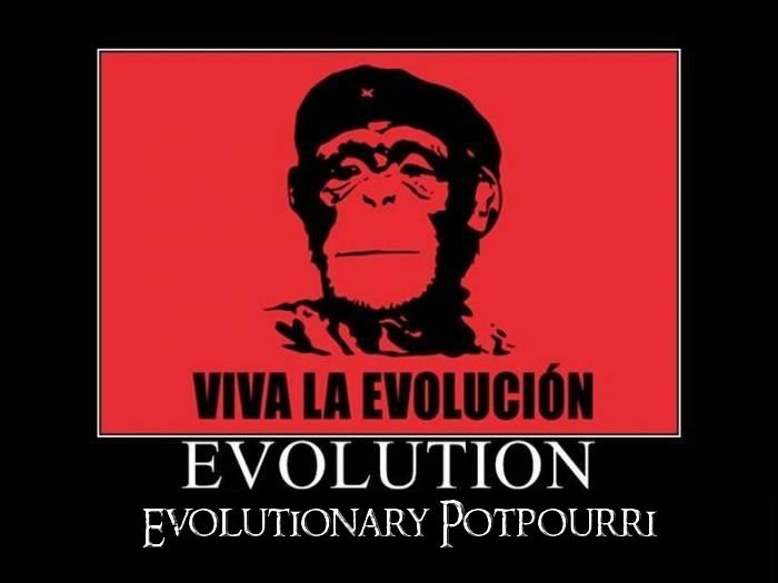 Raeuchermischung evolution 3g